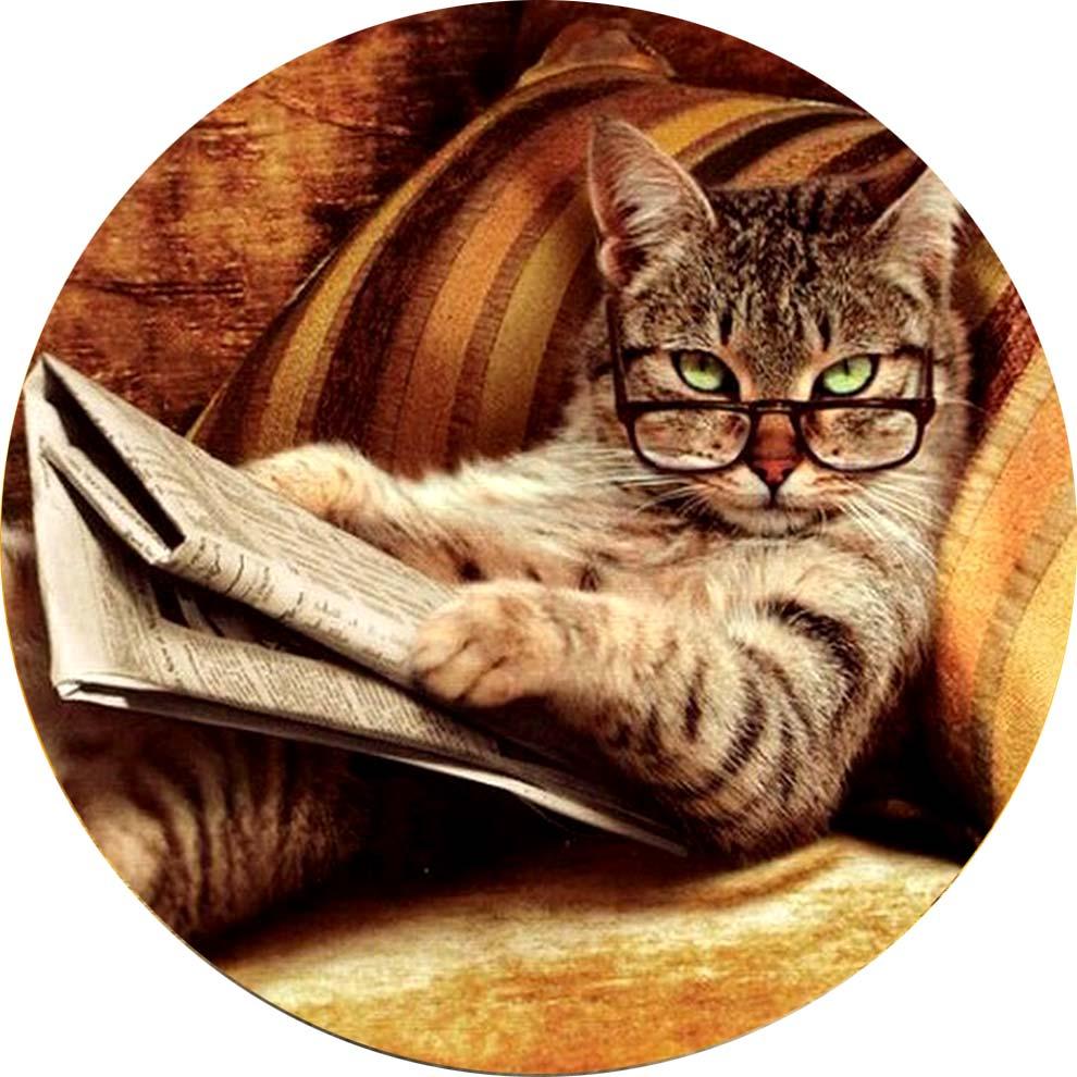 Прикольного кота на аватарку - я занятый кот
