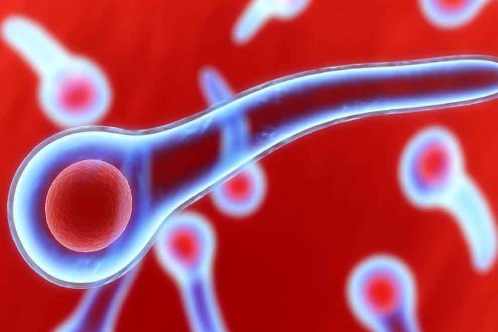 Актуальные вопросы иммунопрофилактики столбняка тесты с ответами