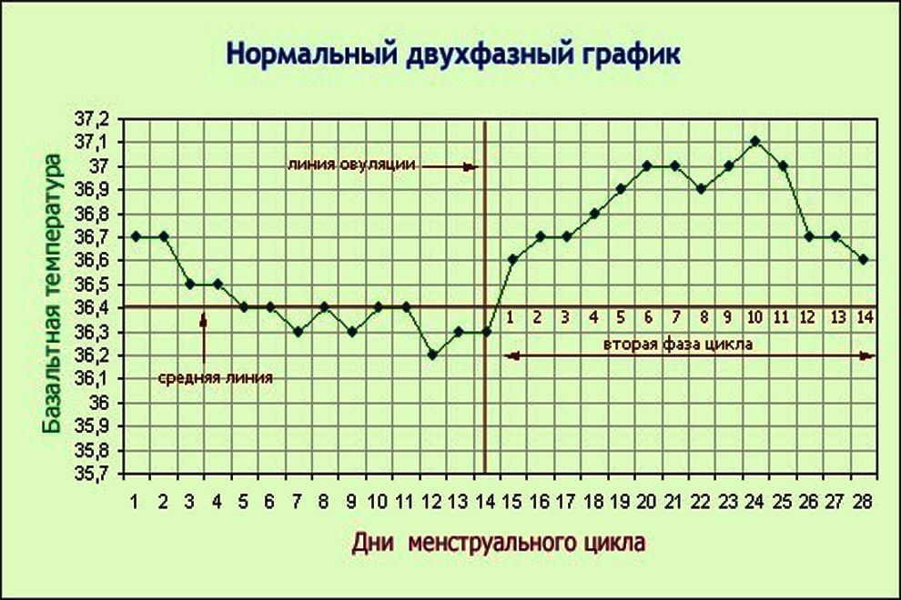 Базальная температура - нормальный двухфазный график