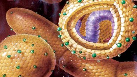 Гепатит С, что это такое и как передается