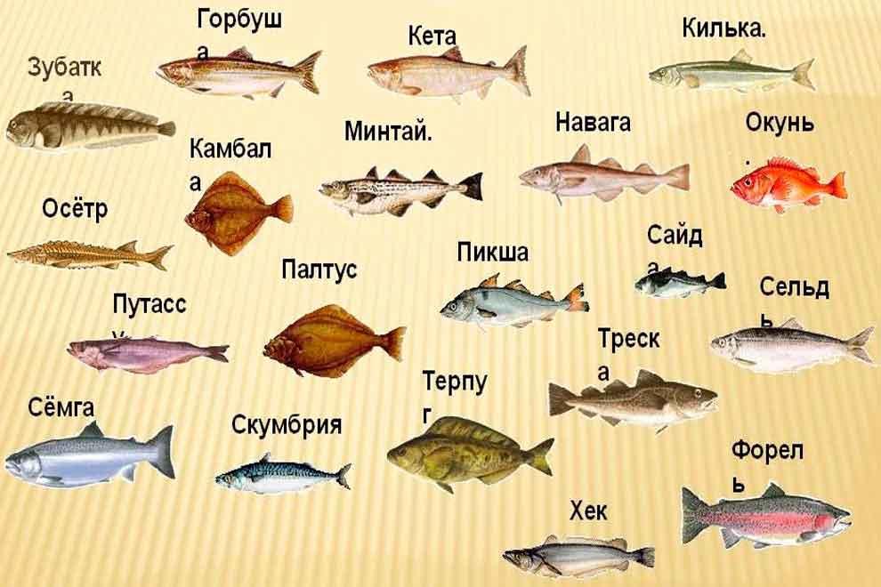 Морская рыба: все виды полным списком с названиями и фото